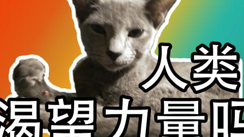【高清吸猫】这只猫居然这么乖!【Moooby出品】
