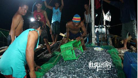世界厨房第73集:菲律宾渔民夜间出海捕捞海蜒鱼,一网的收获竟然将近一吨