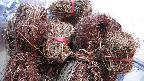 农村常见的鸡骨草植物,农民把它当凉茶喝,却不知还有这种功效
