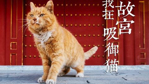 【我在故宫吸御猫】猫薄荷和逗猫棒!让老北京一脸懵逼的故宫玩儿法!