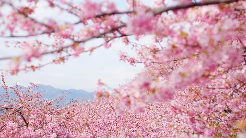 """日语学习教程""""自己的给你的颜色看看"""""""