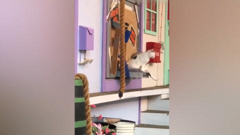 一座神奇的房子:猫咪跑进去变不同的品种