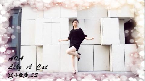 【盛盛】2017韩舞翻跳合集-like a cat