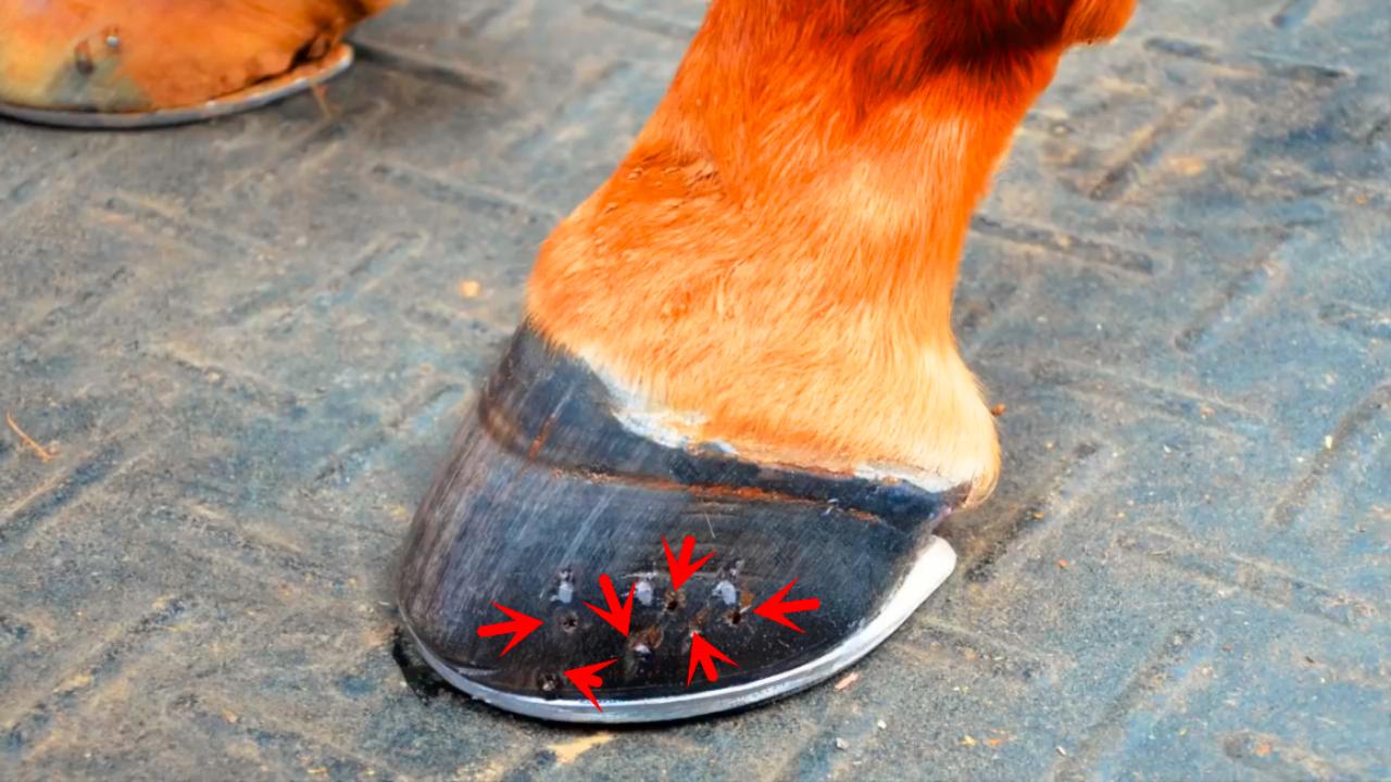 听过不一定见过,带你看看马蹄是如何保养的
