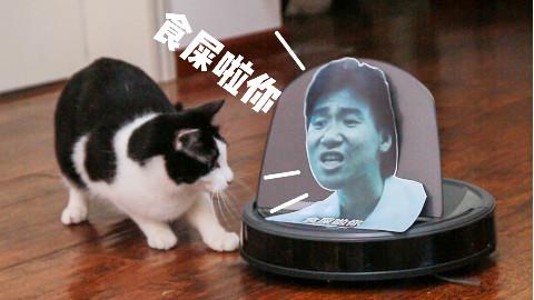 用张学友和VAN的表情包嘲讽猫咪,结果被追着打,猫:你才食屎!