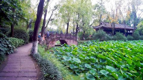 桂湖公园-004《当你孤单你会想起谁》