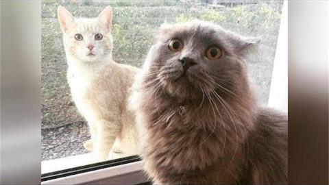 大喵小喵都是喵!猫科类动物爆笑合集