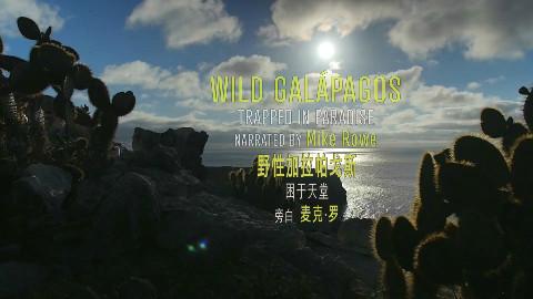 【Doclights】 野性加拉帕戈斯 2【1080p】【双语特效字幕】【纪录片之家爱自然】