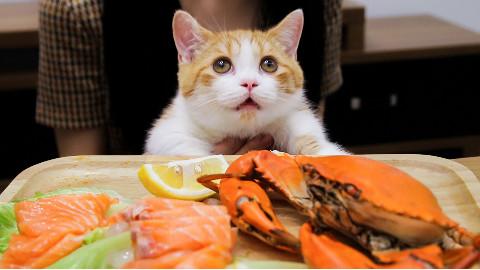 橘猫吃播又来吃海鲜了,确认过眼神,是家里有矿的猫!