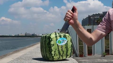 日本西瓜为什么那么贵?一个卖1200,切开后让人无语!