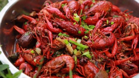 【野居青年】在大理古城吃狗粮,在洱海湖畔爆龙虾