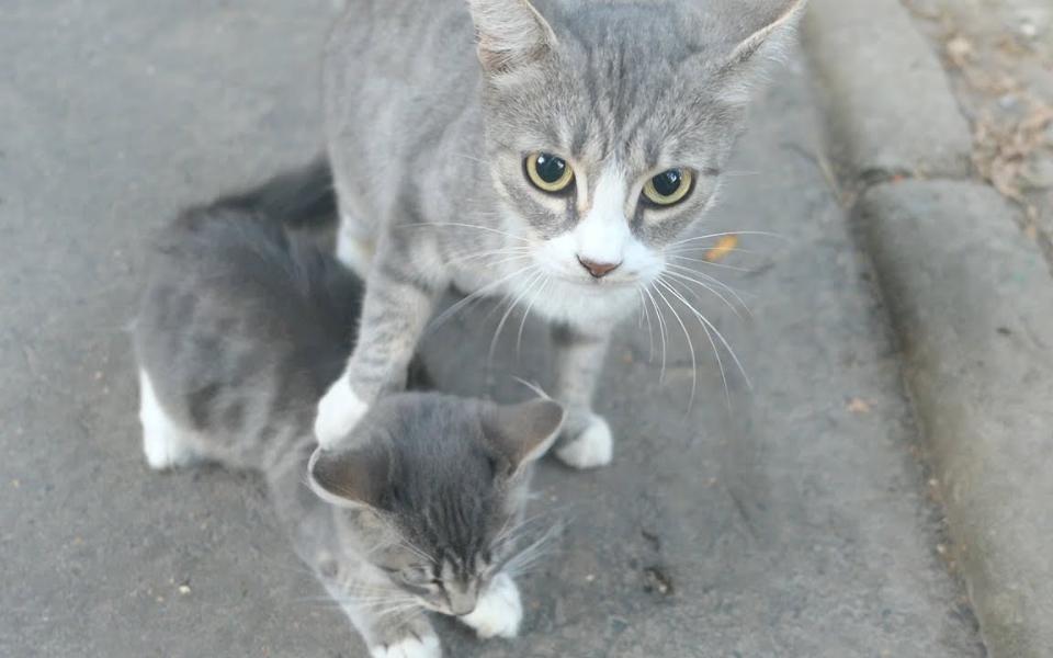 小猫被母猫嫌弃,表情亮了!哈哈哈哈哈哈!