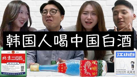 韩国人喝3种中国白酒反应,他们爱上了什么酒?