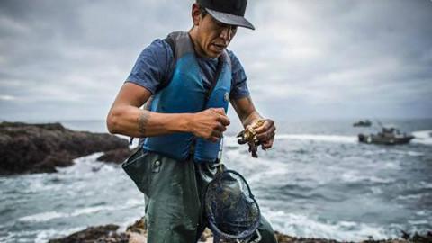 全球最贵的海鲜之一:近1万元一斤,猎手为了钱用生命去捕捞!