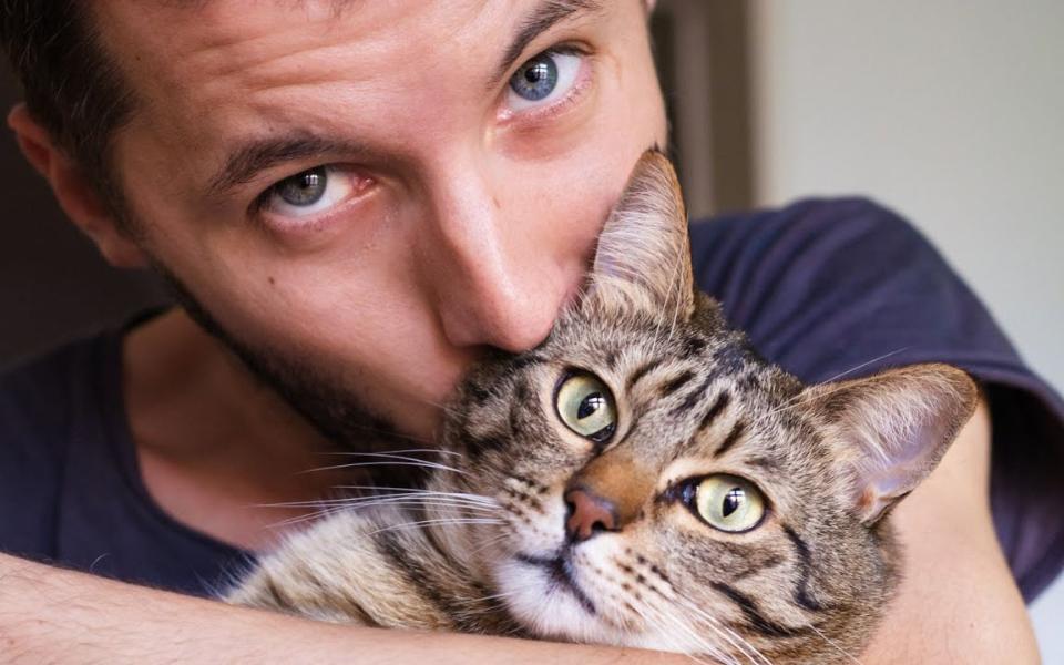 好久没见主人啦,这只猫咪太高兴啦!哈哈哈哈哈