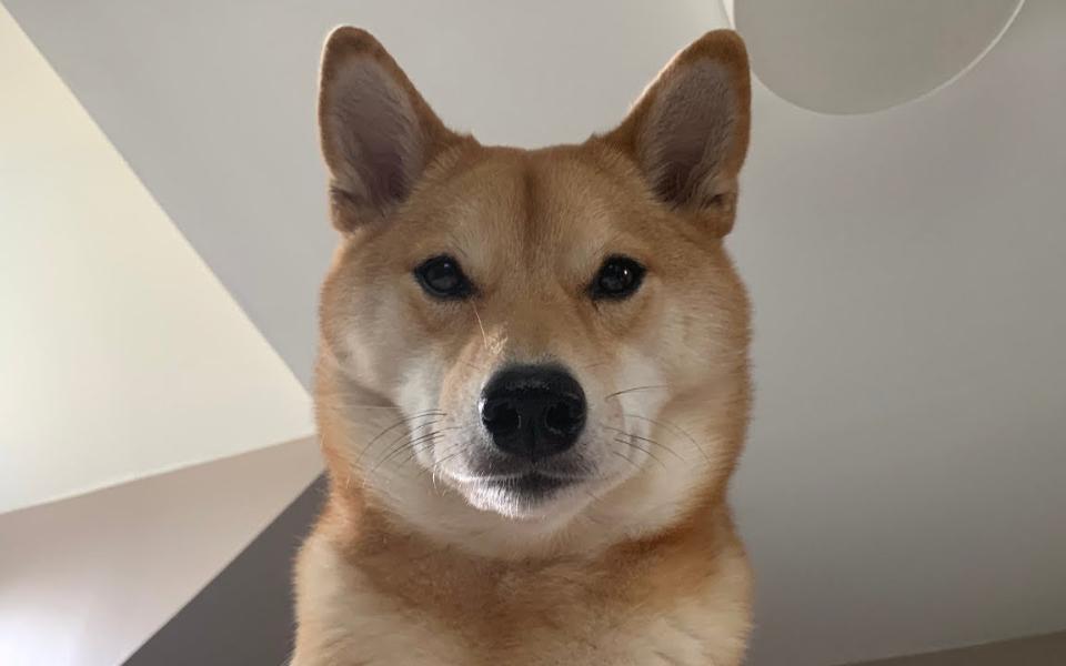 我的狗是怎么叫我起床的?哈哈哈哈哈哈哈