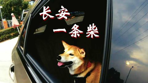 长安一条柴第三期:狗生巅峰,坐最快的奔驰,撩最骚的猫咪