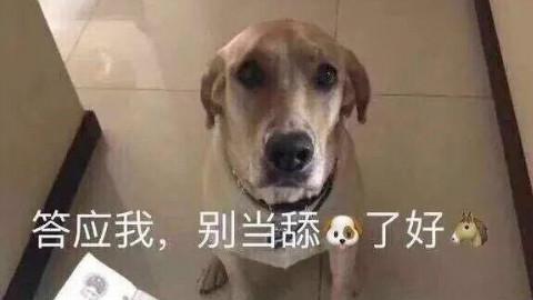 别当一只舔狗好不好