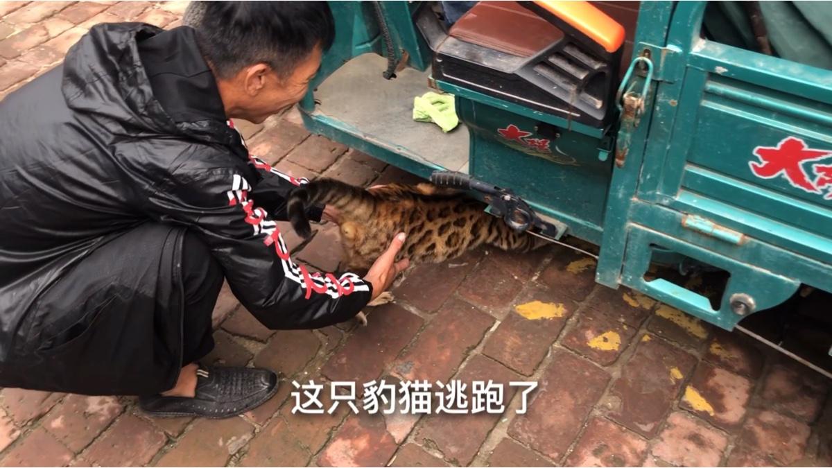狗市遇到豹猫!在主人眼皮之下逃跑,主人身手敏捷又给抓回来了!哈哈