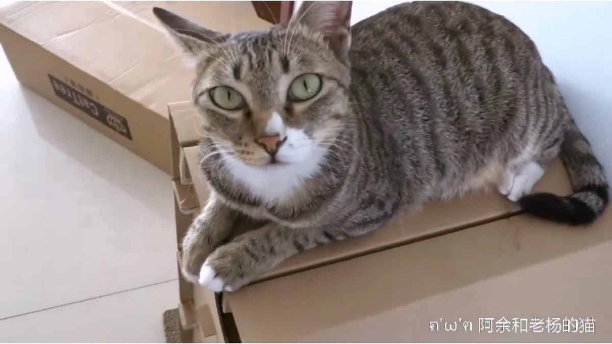 男朋友和猫在家独处几天后,家里变了一个样,猫的拆家本领堪比二哈