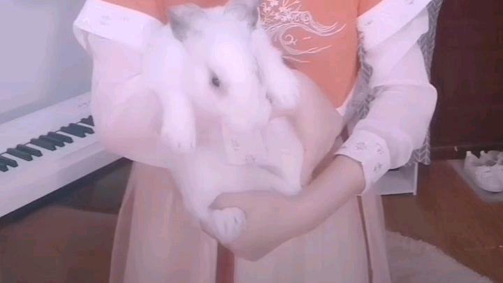 大变活兔,它叫兔丸。