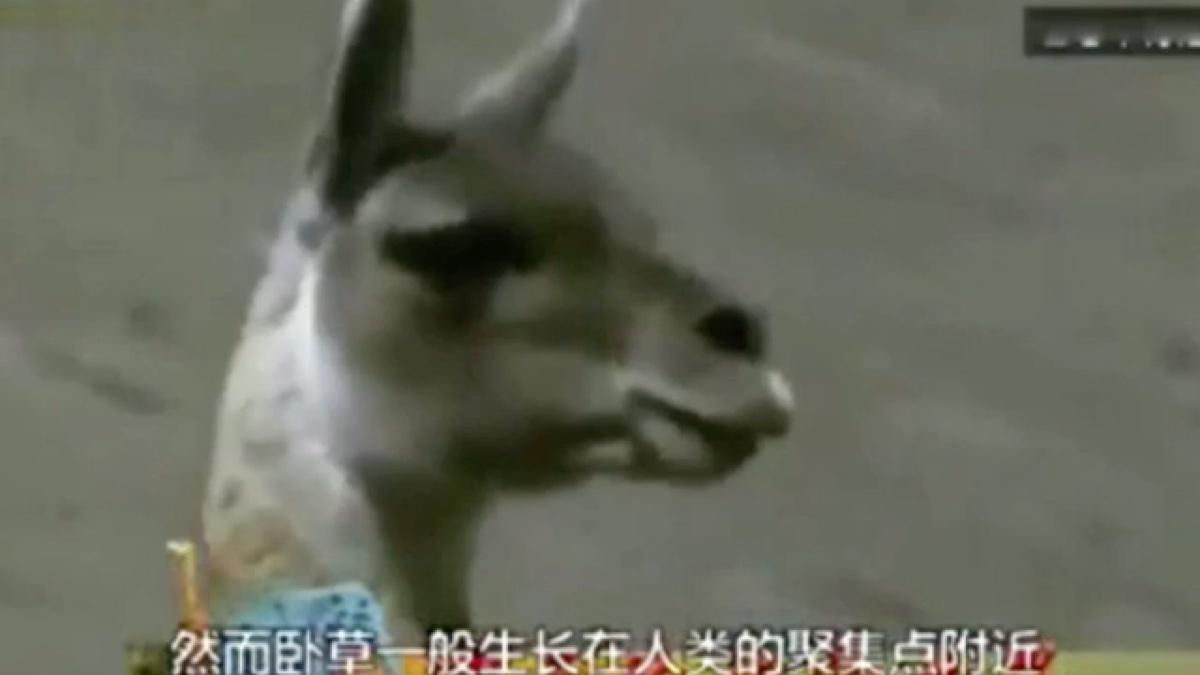 草泥马的纪录片哈哈哈哈笑出猪叫哈哈哈
