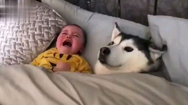 狗子:你看我也是宝宝啊