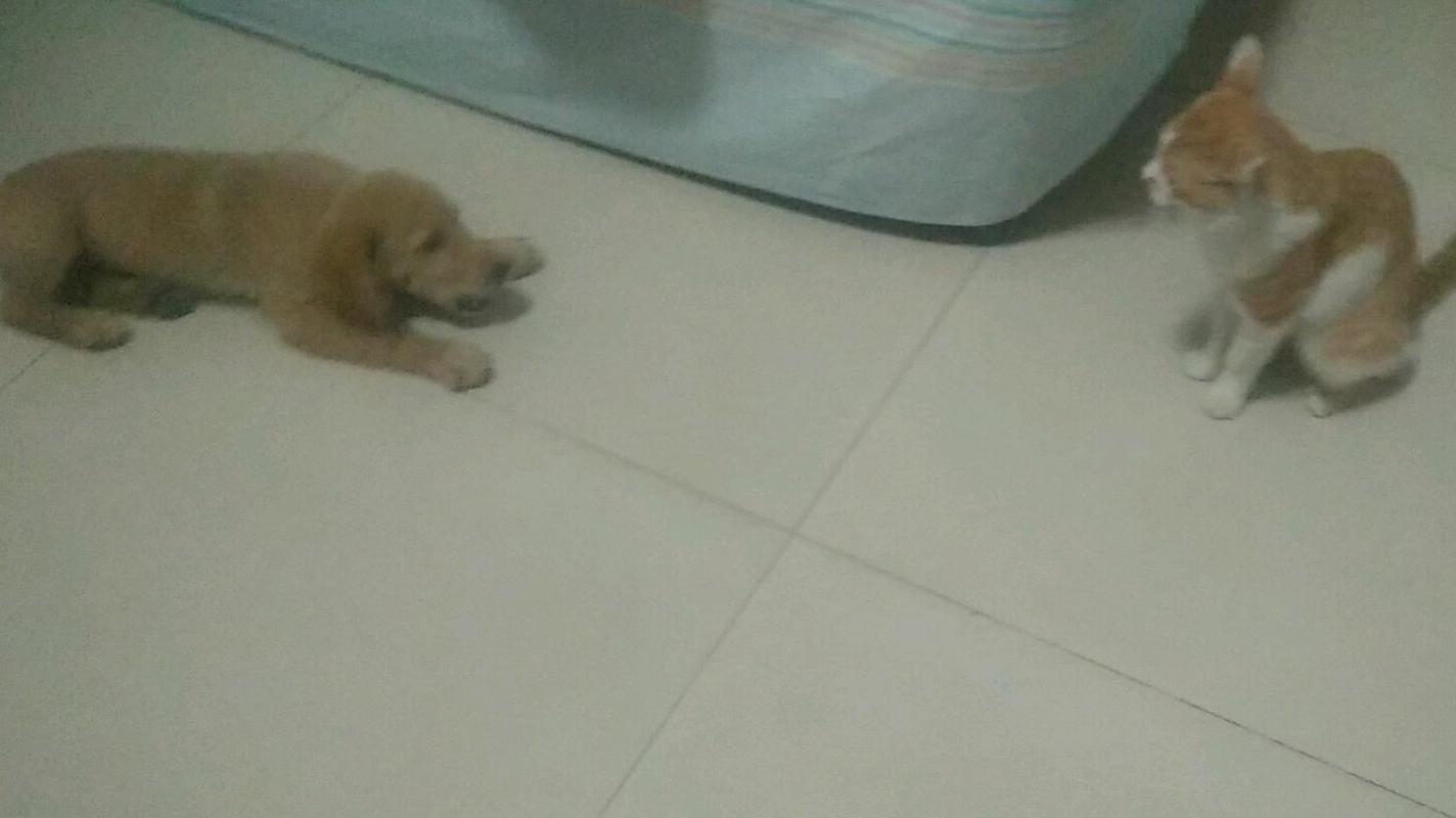 当猫主子第一次见到新来的狗子