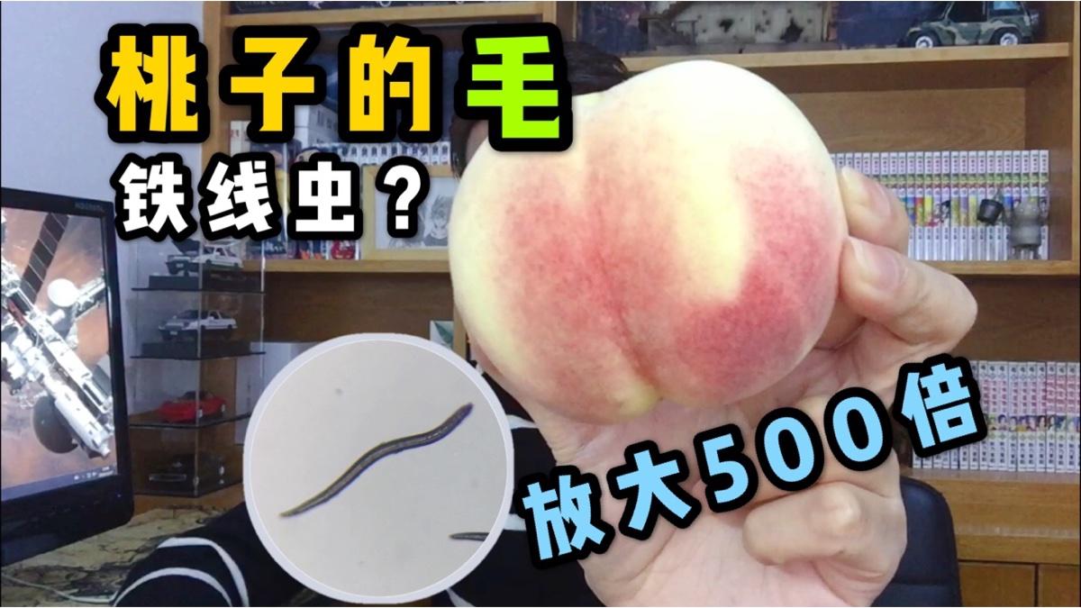 吃桃子为啥要刷毛?桃毛放大500倍像铁线虫入侵!吓得赶紧啃一个先