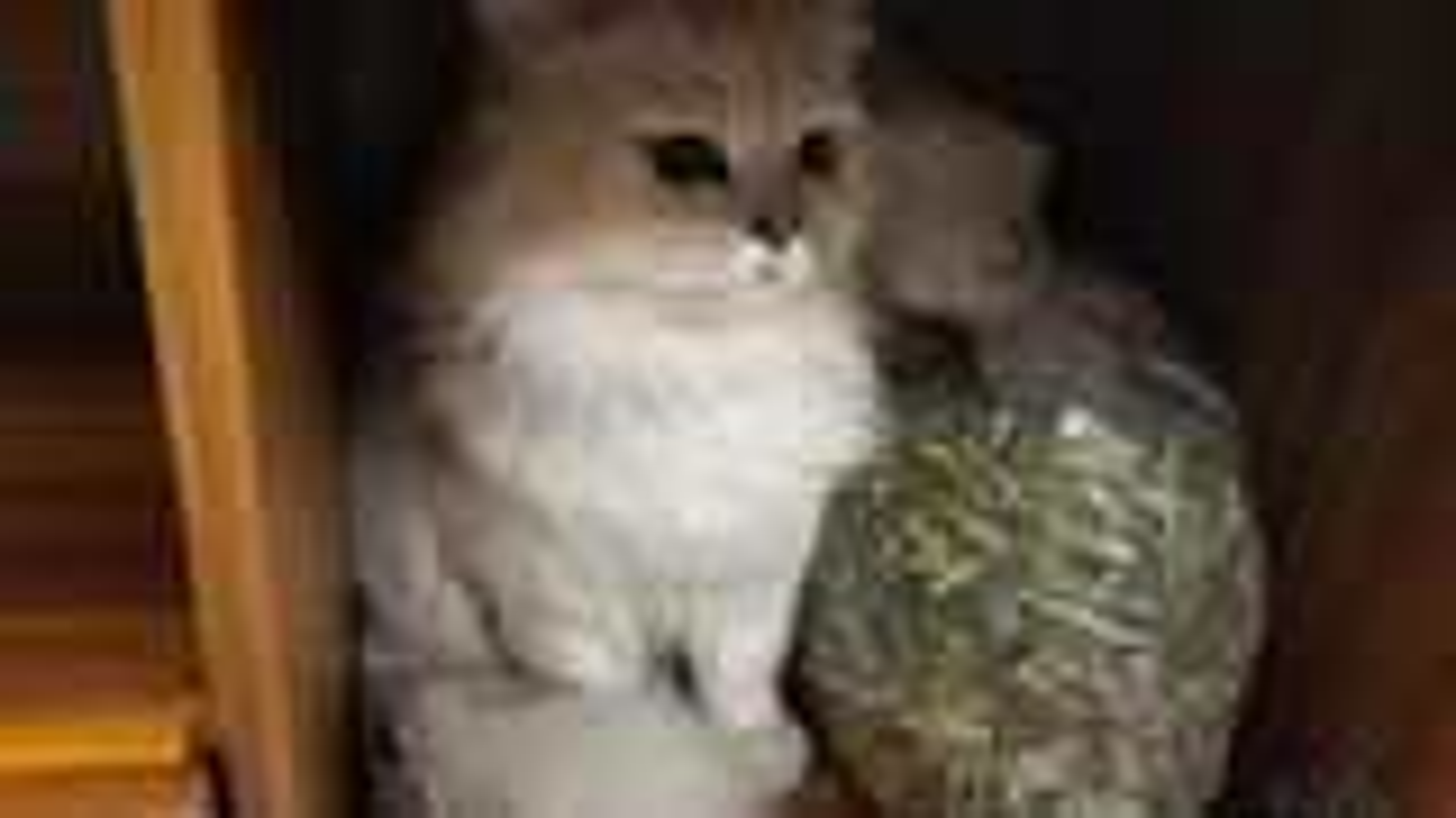 【米糊】温柔踩奶是猫猫