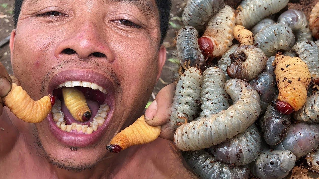 原始文化:神奇的人类发现和烹调椰子虫