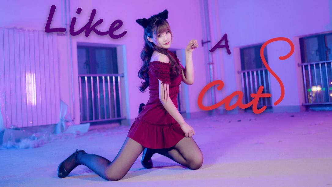 【卧梅】AOA–Like A Cat★做你的猫~