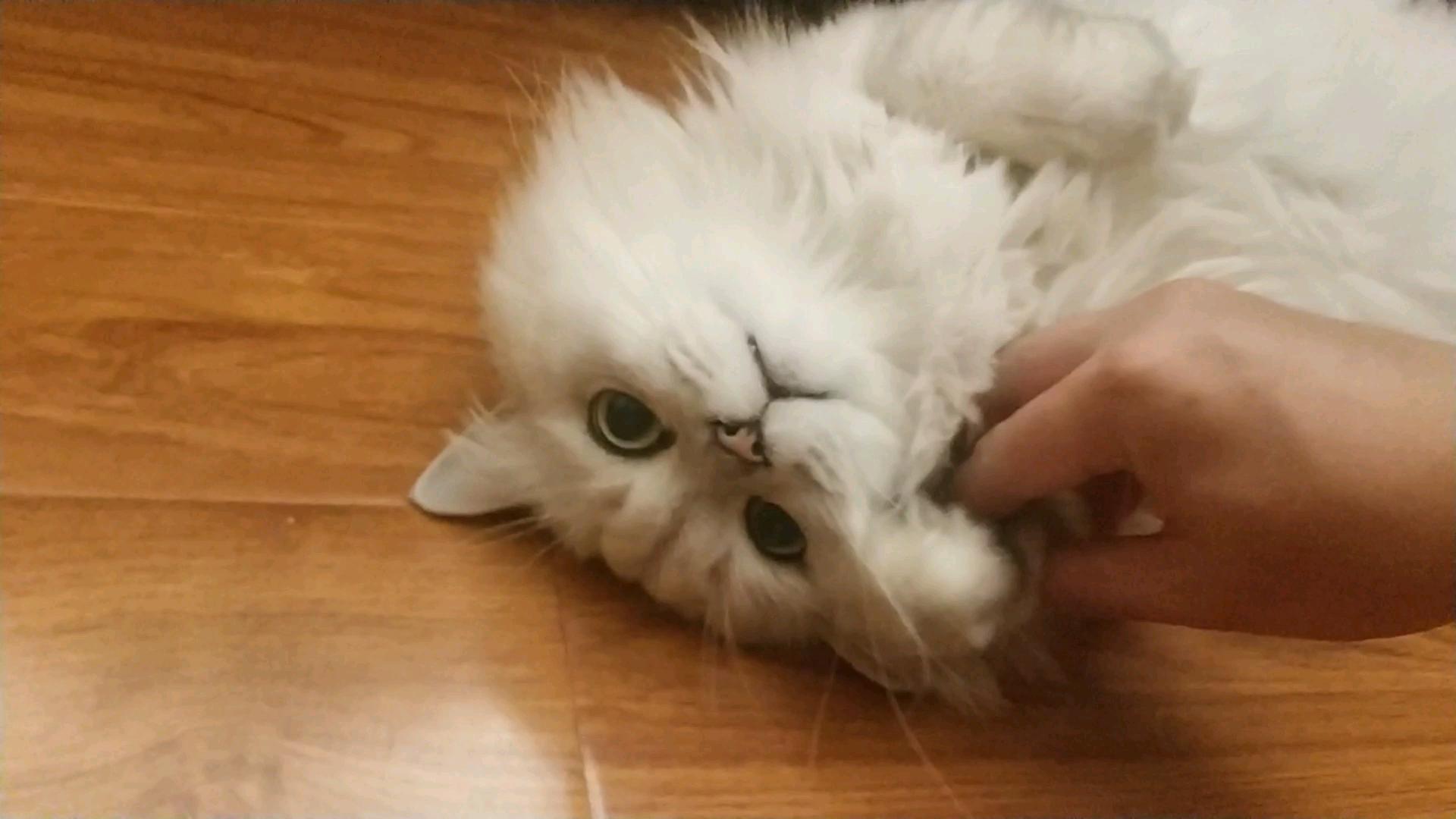 【米糊】被强迫卖萌的可怜猫猫