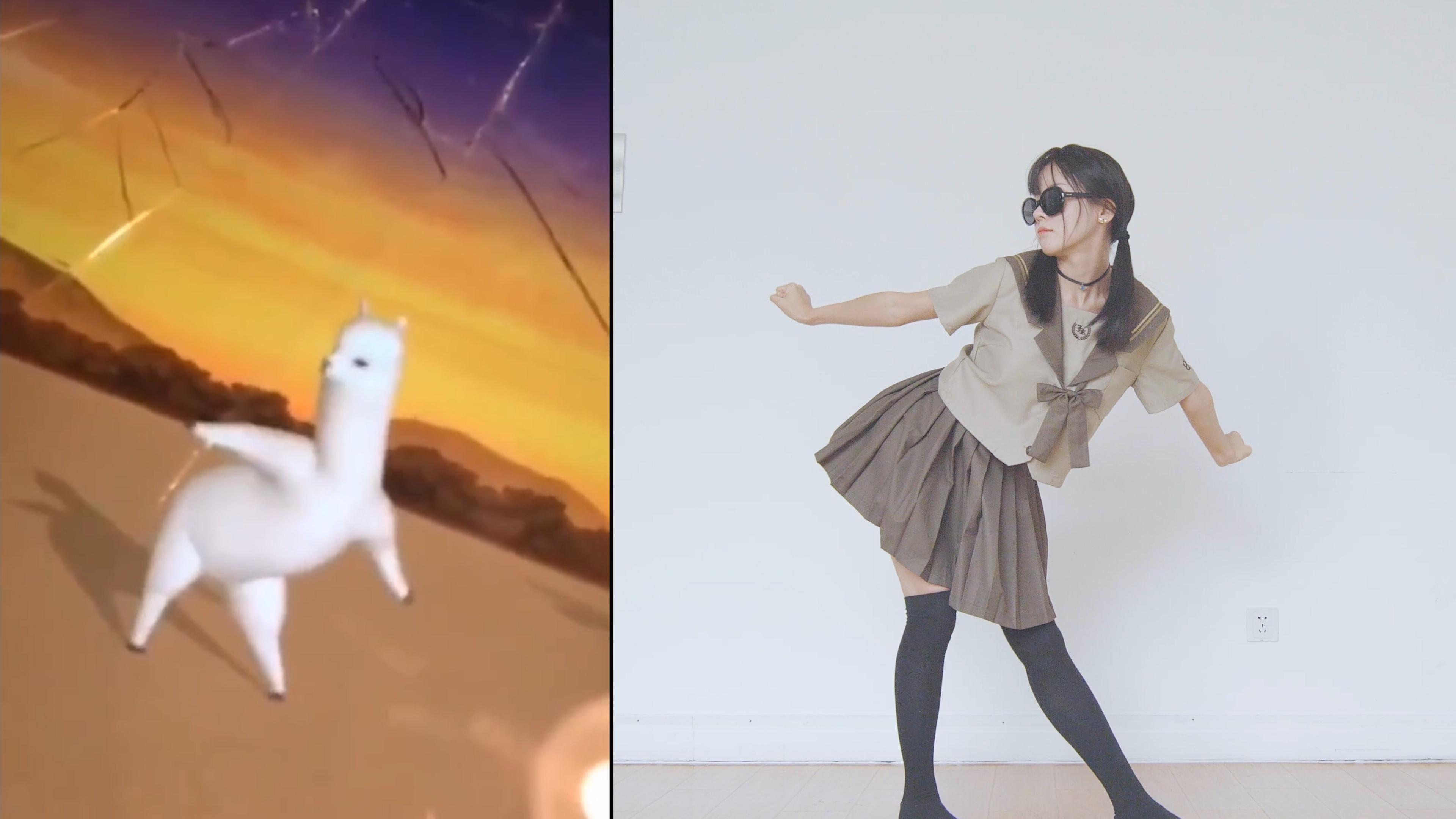 【猫饼】羊驼舞蹈