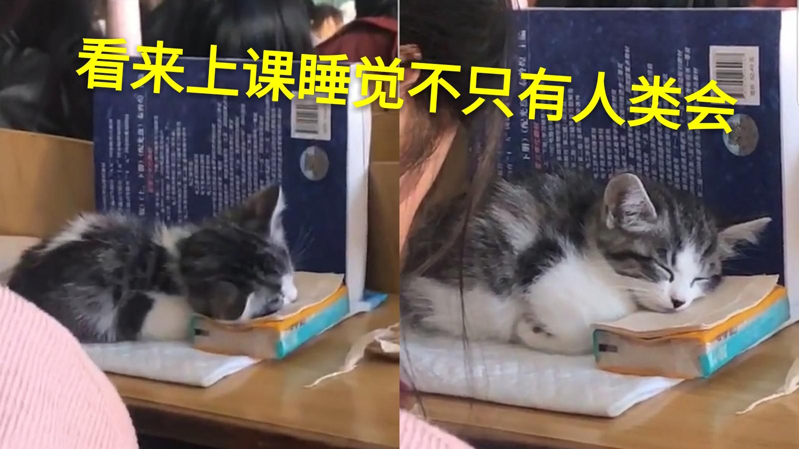报告老师,这有位同学蹭课还睡觉