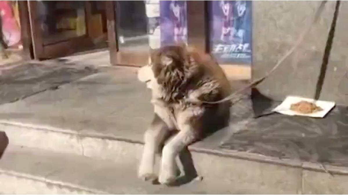 看到主人回家的狗子