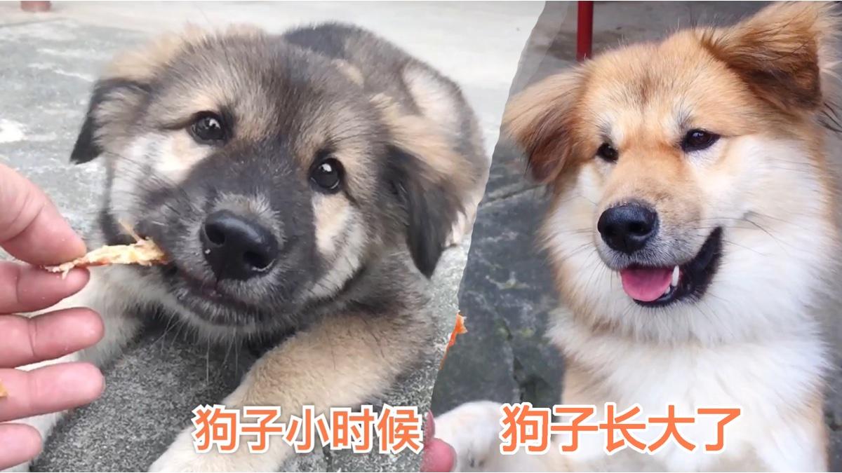 薛定谔的狗,长大后跟换了个狗似的,样子完全变了