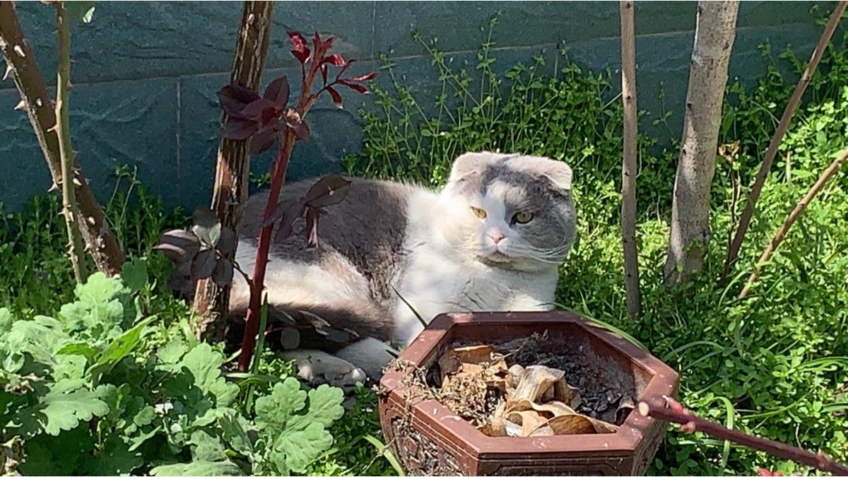 如果最快乐的事是溜猫呢?