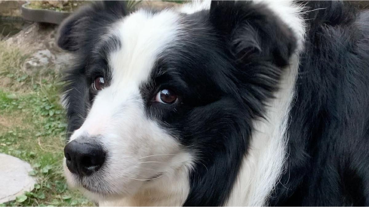 狗子:我虽然不是人 但你是真的狗…