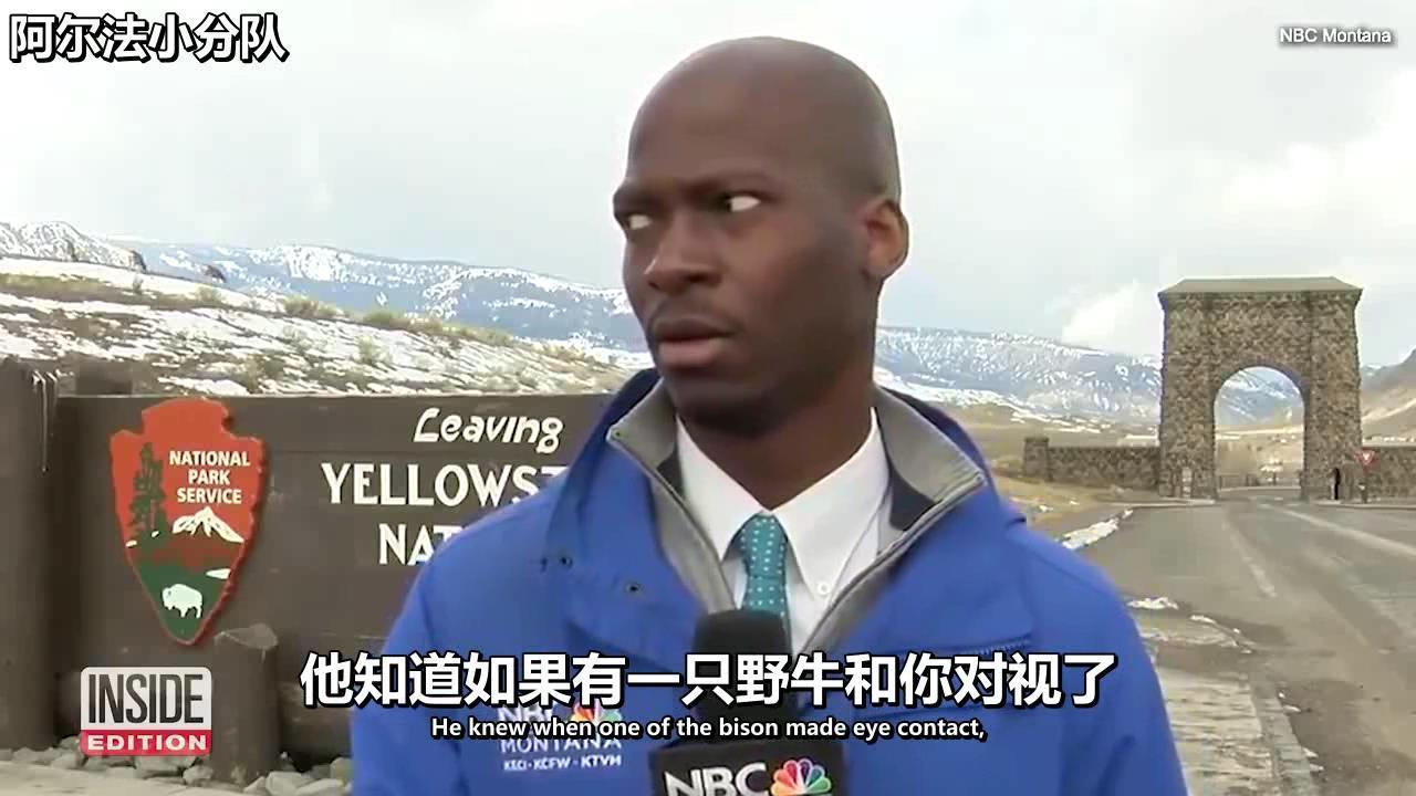 【双语】记者在黄石公园与野牛对上眼神,忘关相机立刻跑路