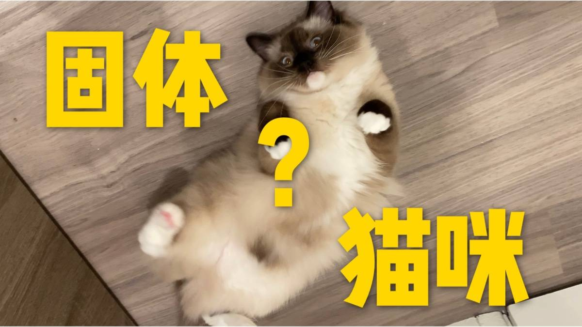 别人家的猫是液体 我家的猫是固体
