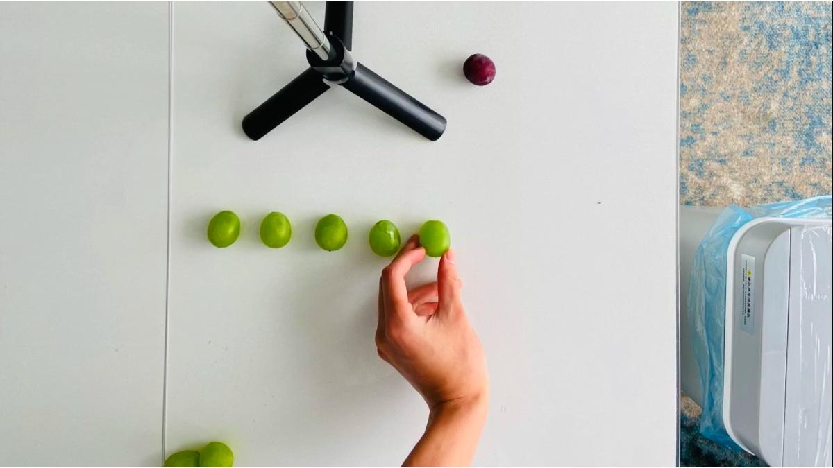 水  果  音  序  器