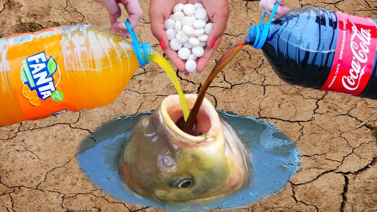 把可乐+曼妥思灌入鱼会怎样?鱼:MMP这是人干的事?