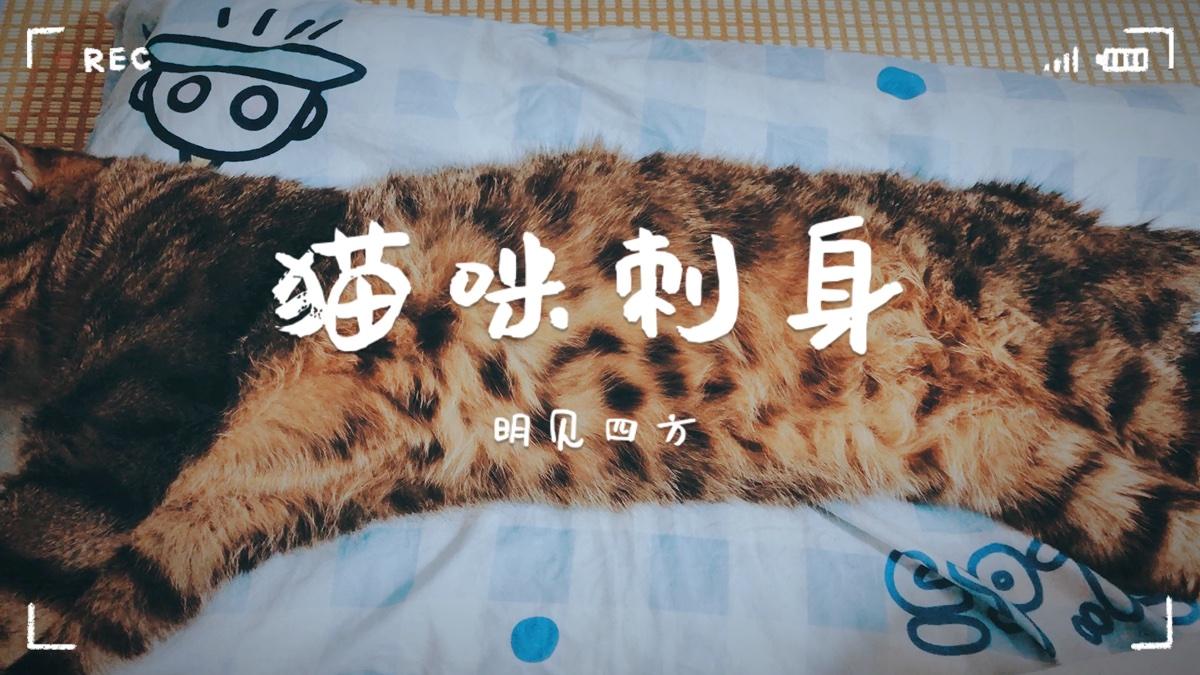 【今日厨房】猫咪刺身