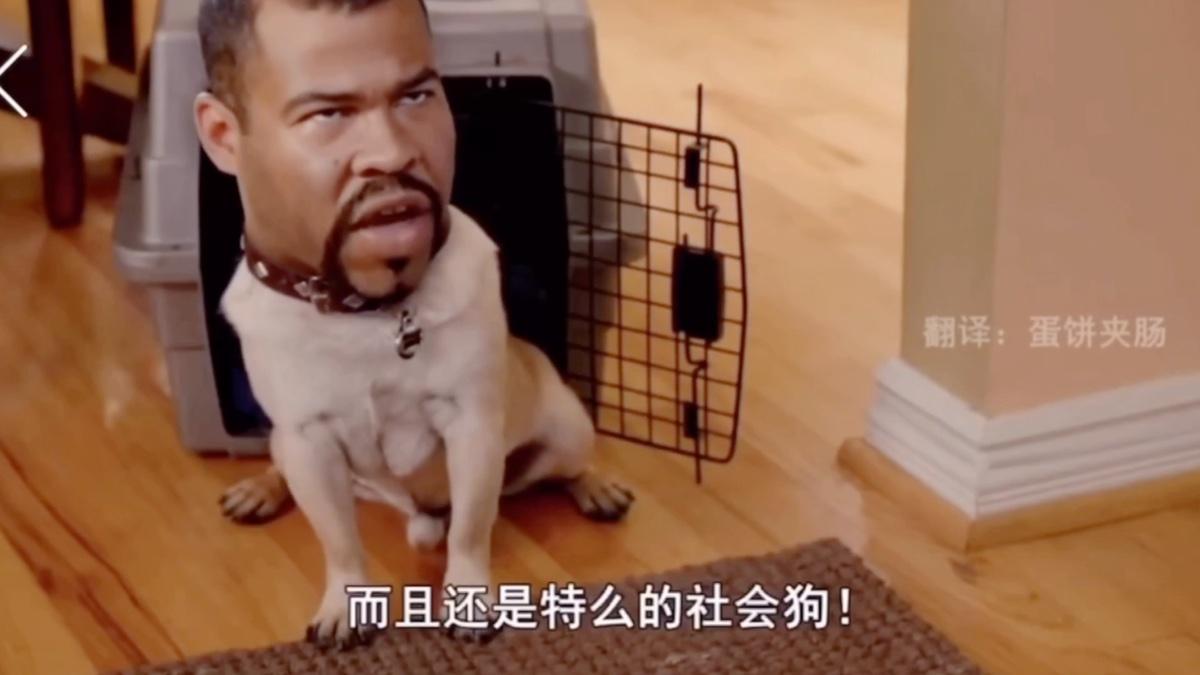 【黑人兄弟】这是真的狗!笑吐了哈哈哈哈哈哈哈哈哈哈哈哈哈哈哈哈哈哈哈哈哈