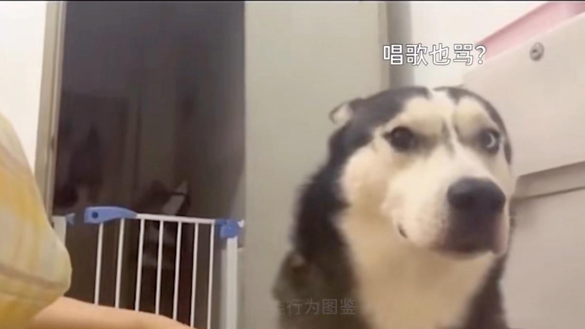 名场面!传说中的打断施法!!!