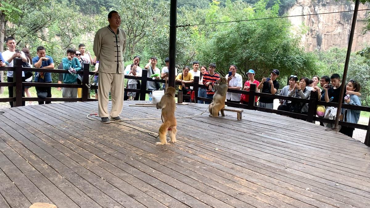 云台山猴戏