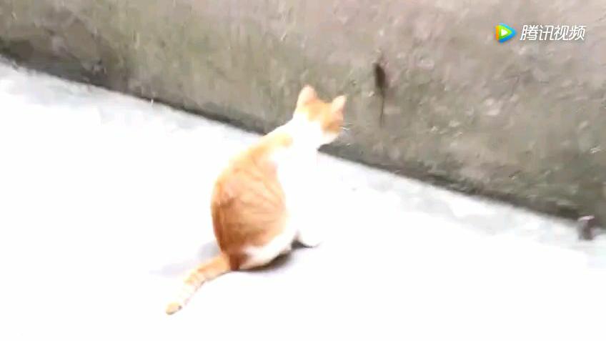 老鼠急了也会爬墙
