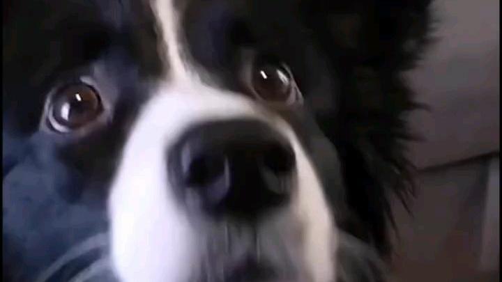 狗子:嫉妒使我面目全非