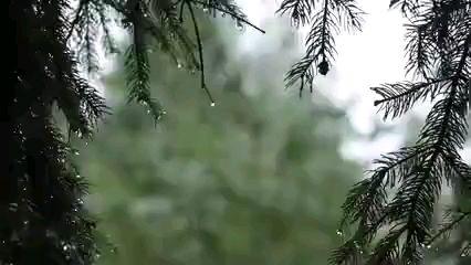 【爱助眠】纯净的大自然 ,风雨声 ,轻松、 解压。
